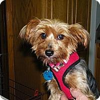 Adopt A Pet :: Josie - Mt Gretna, PA