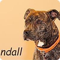 Adopt A Pet :: Kendall - Grafton, OH
