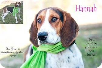 Beagle/Hound (Unknown Type) Mix Dog for adoption in Orangeburg, South Carolina - Hannah - URGENT 3/2