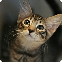 Adopt A Pet :: Neptune - Canoga Park, CA