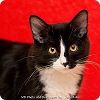 Adopt A Pet :: Mollyana - Fountain Hills, AZ