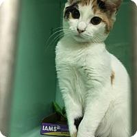 Adopt A Pet :: Chrissy - Rockaway, NJ