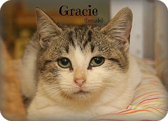 Domestic Shorthair Kitten for adoption in Glen Mills, Pennsylvania - Gracie