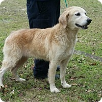 Adopt A Pet :: Shelley - New Canaan, CT