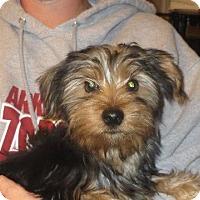 Adopt A Pet :: Ricky - Salem, NH