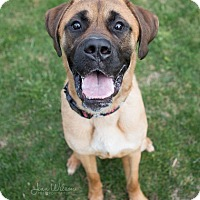 Adopt A Pet :: Norm - Drumbo, ON