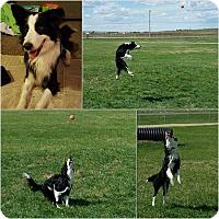 Adopt A Pet :: Khali - Regina, SK