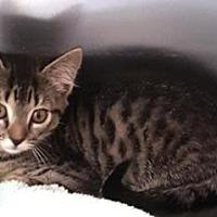 Adopt A Pet :: Nita - Americus, GA