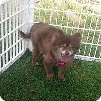 Adopt A Pet :: CHARLOTTE - Smithfield, PA