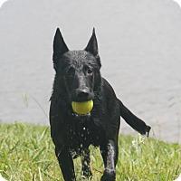 Adopt A Pet :: Jet (Adoption pending) - Morrisville, NC