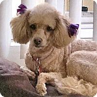 Adopt A Pet :: Callie - Costa Mesa, CA