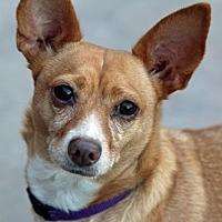 Adopt A Pet :: DAPPER - Palm Springs, CA