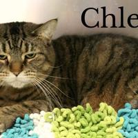 Adopt A Pet :: Chleo - Melbourne, KY