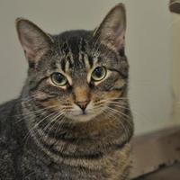 Adopt A Pet :: Pipkin - Oshkosh, WI
