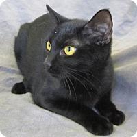 Adopt A Pet :: OZZIE - Anna, IL