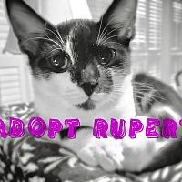 Adopt A Pet :: Rupert - Homewood, AL