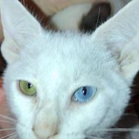 Adopt A Pet :: Princeton - Mobile, AL