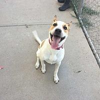 Adopt A Pet :: Tam aka Princess Mia - Aurora, CO