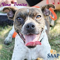 Adopt A Pet :: Nina Bonita - Newport, KY