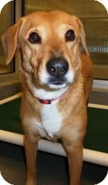 Golden Retriever Mix Dog for adoption in Columbus, Georgia - Poochie 0342