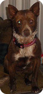 Basenji Mix Dog for adoption in Aloha, Oregon - Basenji