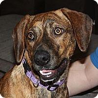 Adopt A Pet :: Ann - in Maine - kennebunkport, ME