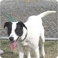 Adopt A Pet :: Dodge - Yerington, NV