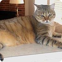 Adopt A Pet :: Louie - Dallas, TX