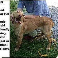 Adopt A Pet :: # 374-09 @ Animal Shelter - Zanesville, OH