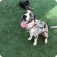 Adopt A Pet :: COPPER-JJK - Roundup, MT