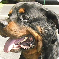 Adopt A Pet :: Monae - Pembroke Pines, FL