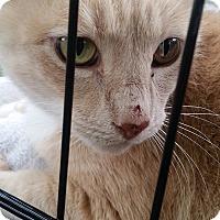 Adopt A Pet :: Rusty needs a hero - Ocala, FL