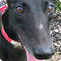 Adopt A Pet :: Spirit In Heaven - Longwood, FL