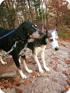 Hound (Unknown Type) Mix Dog for adoption in Ottawa, Ontario - Oz