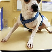 Adopt A Pet :: Lenny - Monrovia, CA