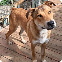 Adopt A Pet :: Austin - Santa Ana, CA