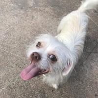 Adopt A Pet :: Maddox - Santa Fe, TX