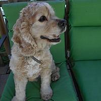 Adopt A Pet :: Renzor - Kannapolis, NC