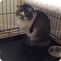 Adopt A Pet :: Moe  *Courtesy Post* - Covington, KY