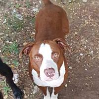 Adopt A Pet :: Clyde (ETAA) - Spring Valley, NY