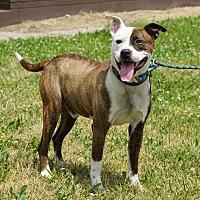 Adopt A Pet :: Miles - Troy, MI