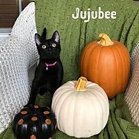 Adopt A Pet :: Jujubee - Columbus, OH