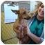 Photo 2 - Fox Terrier (Toy) Mix Puppy for adoption in Cincinnati, Ohio - Porsche