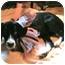 Photo 3 - Great Dane/Coonhound Mix Puppy for adoption in Cincinnati, Ohio - Sophia