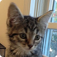 Adopt A Pet :: SHERRY - 2013 - Hamilton, NJ
