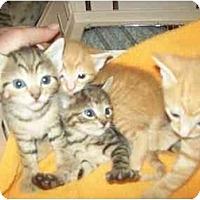 Adopt A Pet :: STILL AVAIL - Little Neck, NY