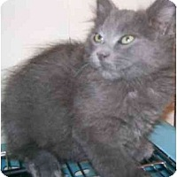 Adopt A Pet :: Yoshi - Davis, CA