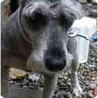Adopt A Pet :: Pepe - Warren, NJ