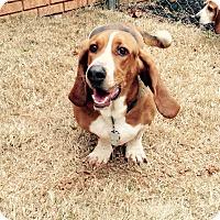 Adopt A Pet :: Ricky Bobby - Columbia, SC