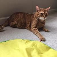 Adopt A Pet :: Seamus* - Trexlertown, PA